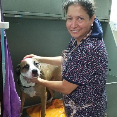 Dog Grooming in Conway /Ana's Dog Spa Orlando, FL Thumbtack