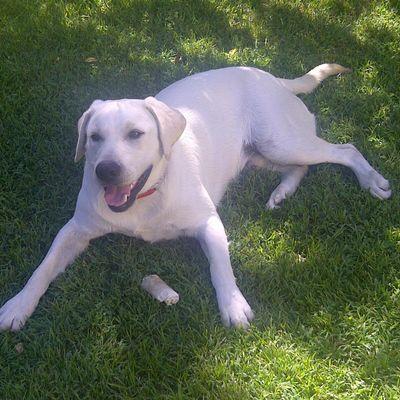Bark Busters Home Dog Training Tucson, AZ Thumbtack