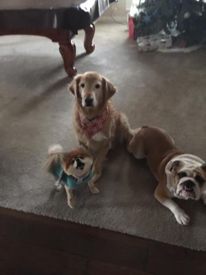 D'Annes Home Alone Pet Sitting Mckinney, TX Thumbtack