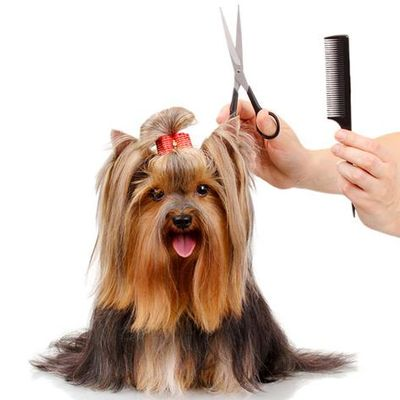 Pawpawrazzi Pets dba The Happy Dog Mobile Grooming Spring, TX Thumbtack