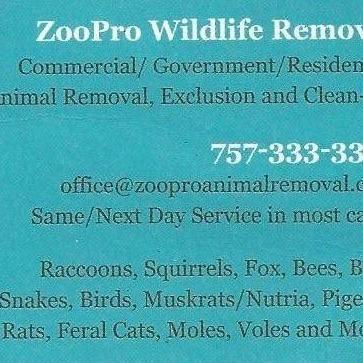 ZooPro Wildlife Removal Virginia Beach, VA Thumbtack