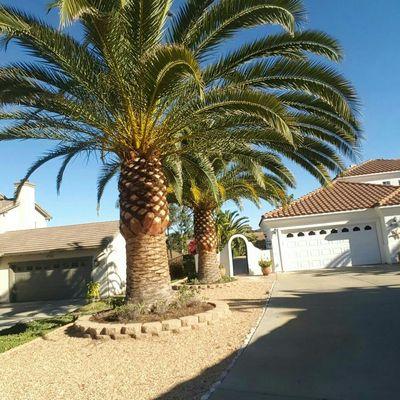Rising Oak Tree Service & Landscaping Escondido, CA Thumbtack