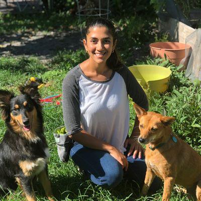 Aninanny Dog Training LLC Fort Lauderdale, FL Thumbtack