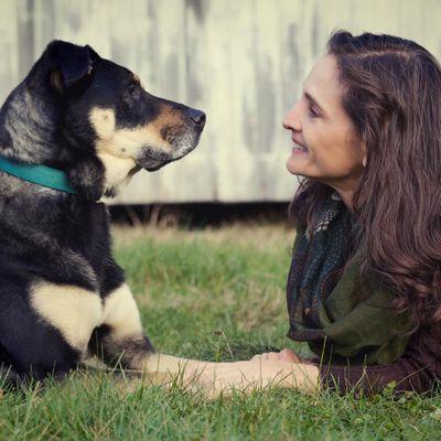 Eye-to-Eye Dog Training Portsmouth, RI Thumbtack
