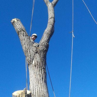 Tornado's Tree Service Inc. Dallas, TX Thumbtack