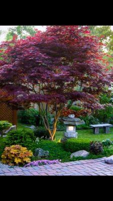 Endeavor Tree Experts, Inc. Saint Charles, IL Thumbtack