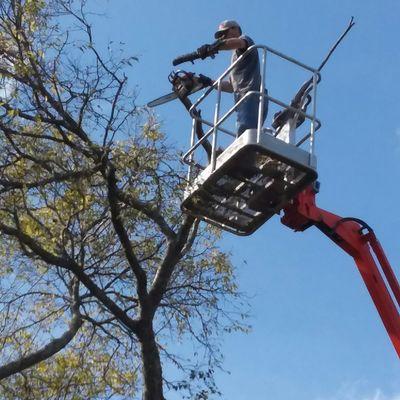 L&M Lawn Care and Tree Service Murfreesboro, TN Thumbtack