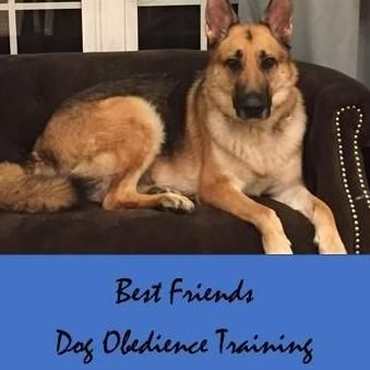 Best Friends Dog Obedience Training West Palm Beach, FL Thumbtack