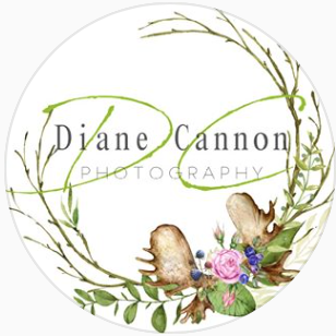Diane Cannon Photography O Fallon, MO Thumbtack