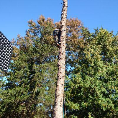 Ross Tree and Contracting, Inc. Sudbury, MA Thumbtack