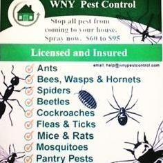 WNY Pest Control Buffalo, NY Thumbtack