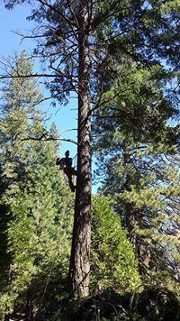 Jason's Tree Service Placerville, CA Thumbtack