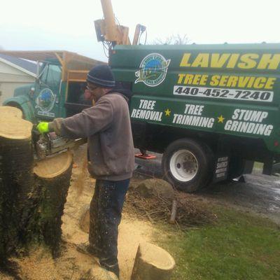 Lavish lawn care and Tree Service Lorain, OH Thumbtack