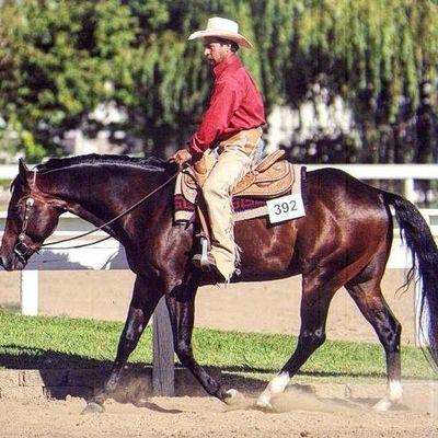 Central Valley Performance Horses Elk Grove, CA Thumbtack