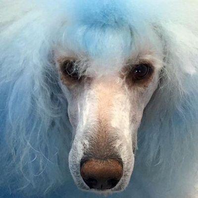 Blue Dog Pet Grooming Virginia Beach, VA Thumbtack