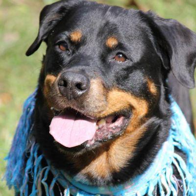 Jane's Dog Care Service Clinton, MD Thumbtack
