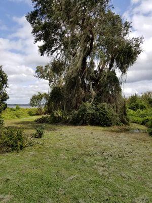 Ezee Landscaping Haines City, FL Thumbtack