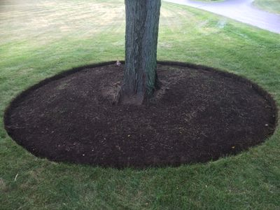 Northern Illinois Landscaping & Tree Removal Carpentersville, IL Thumbtack