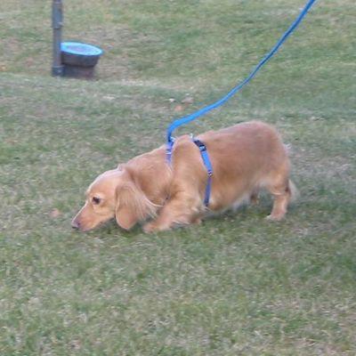 Best Yet Behavior & Dog Training Caledonia, WI Thumbtack