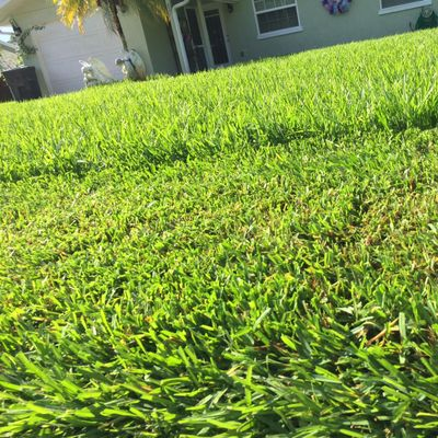 Daytona Beach Lawns LLC Daytona Beach, FL Thumbtack