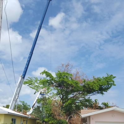 All Around Tree & Landscaping Specialists Cape Coral, FL Thumbtack