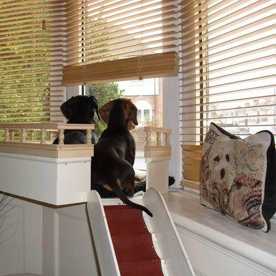 Ms. Jax Elaine House & Pet Sitting Davenport, IA Thumbtack