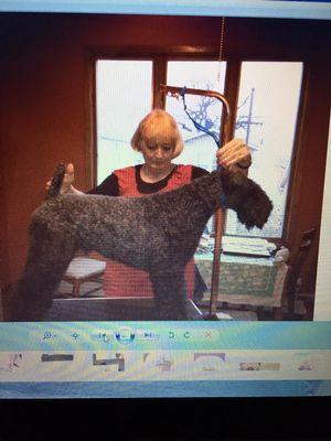 Suzanne's Pet Services Riverside, CT Thumbtack