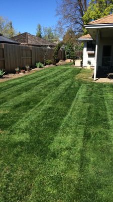 Calvin's Lawn And Landscape Florence, SC Thumbtack