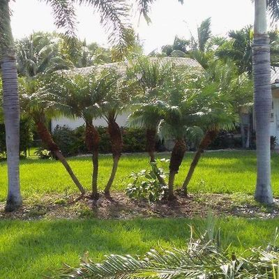 Advanced Tree Services & Property Maintenance LLC Hollywood, FL Thumbtack