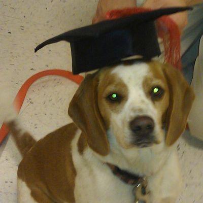 Patiently Positive Dog Training Ithaca, NY Thumbtack