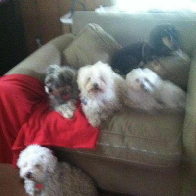 """""""TLC Pet Care"""" Stamford, CT Thumbtack"""