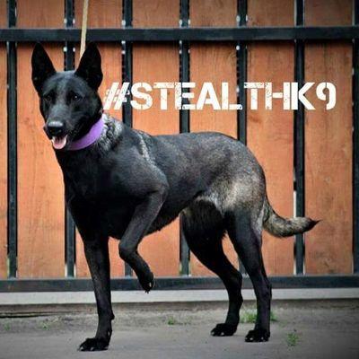 Stealth k9 Houston, TX Thumbtack