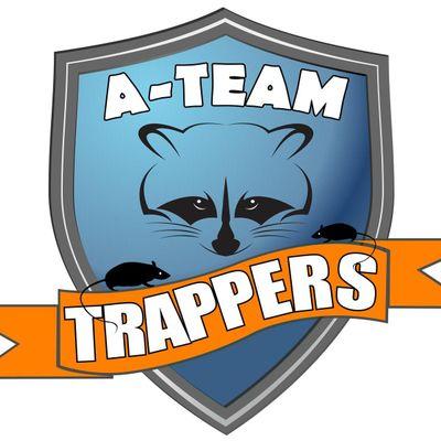 A-Team Trappers Saint Petersburg, FL Thumbtack