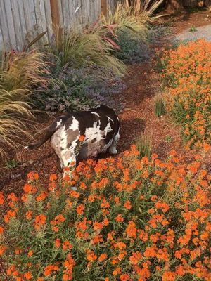GreenHeart Lawn Pros Mckinleyville, CA Thumbtack
