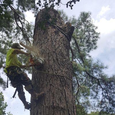 AR Tree Services Memphis, TN Thumbtack
