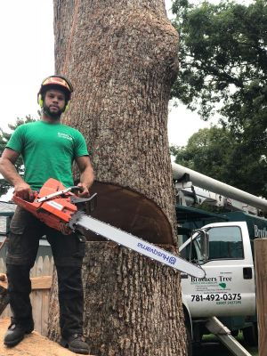 Brother's Tree Service and Landscape corp East Weymouth, MA Thumbtack
