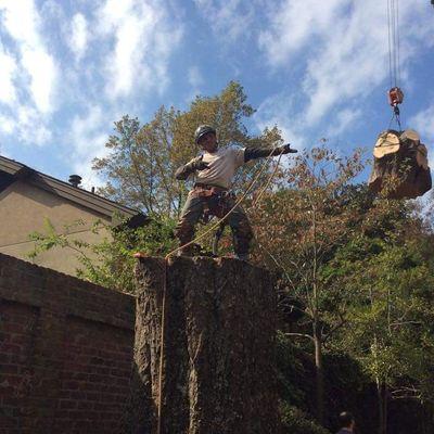 Mickey's  Tree  Service Memphis, TN Thumbtack