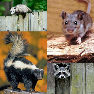 All Dunn Animal Removal Kenosha, WI Thumbtack