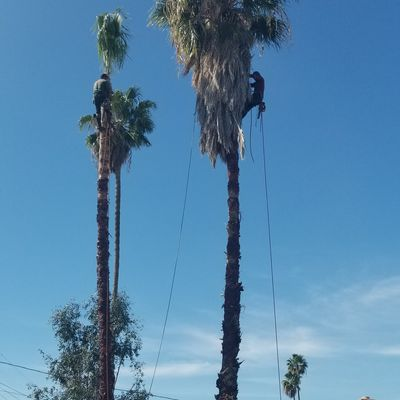 On The Way Tree Service Sacramento, CA Thumbtack