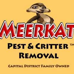 Meerkat Albany, NY Thumbtack