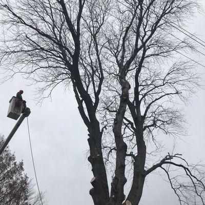 TreeWorkz LLC West Chester, PA Thumbtack