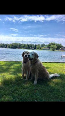 Patty's Dog Training Dearborn, MI Thumbtack