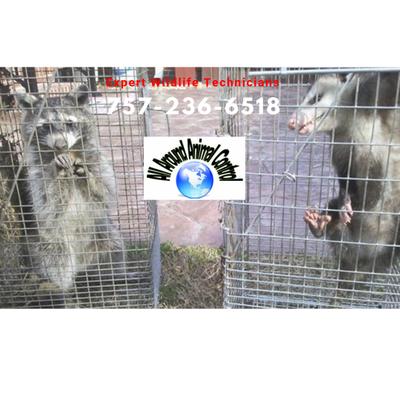 All Around Animal Control - Wildlife & Bee Control Norfolk, VA Thumbtack