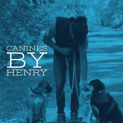 Canines By Henry Mooresville, NC Thumbtack