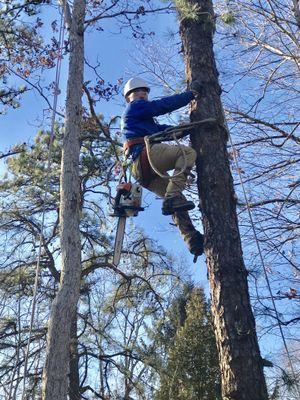 Figuemax Tree Service Somerdale, NJ Thumbtack