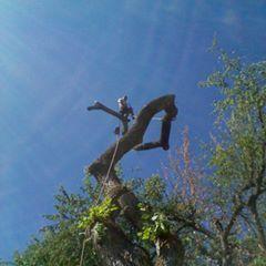 Matias Tree Care & Landscape Contractor Sacramento, CA Thumbtack
