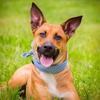 Wag Ur Tail Dog Training Stafford, VA Thumbtack