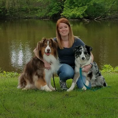 All Paws In Dog Training Butler, WI Thumbtack