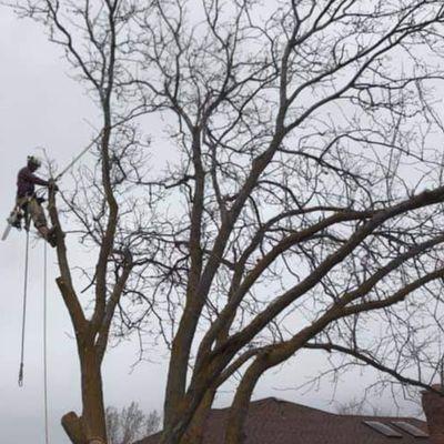 Lumberjax Tree Service Layton, UT Thumbtack