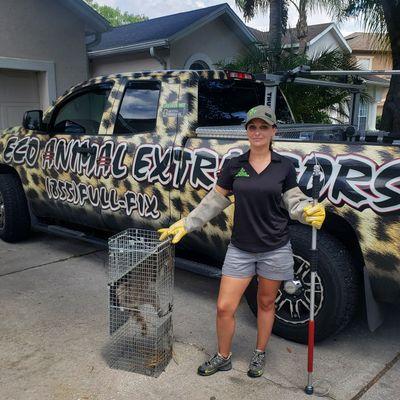 Eco Animal Extractors Lake Mary, FL Thumbtack